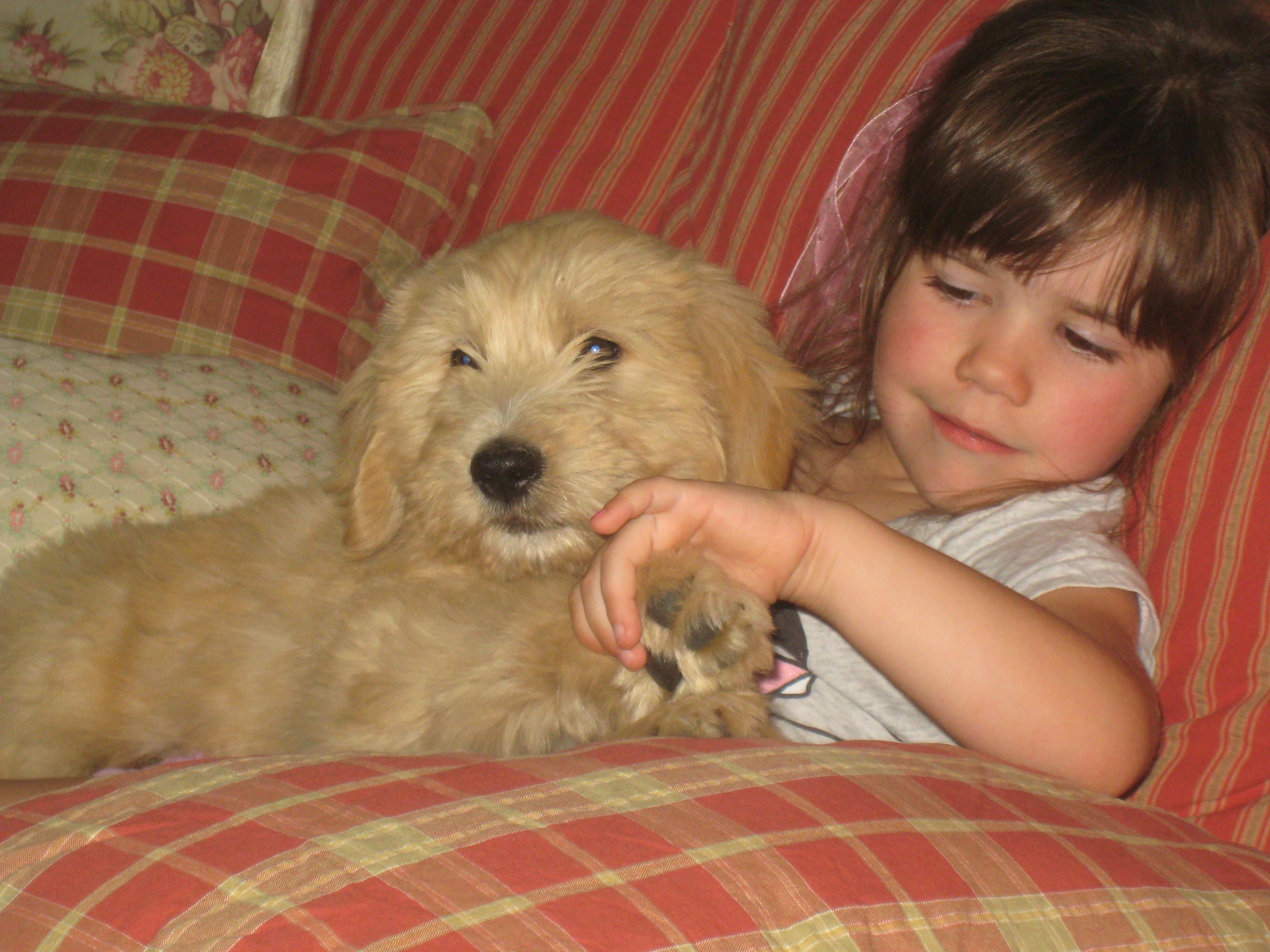 puppy; amazon favorites