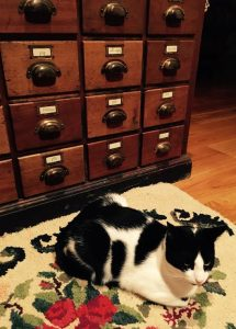 fish the cat in front of antique apothecary