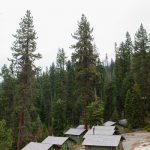 mountain view cabins at montecito sequoia family camp