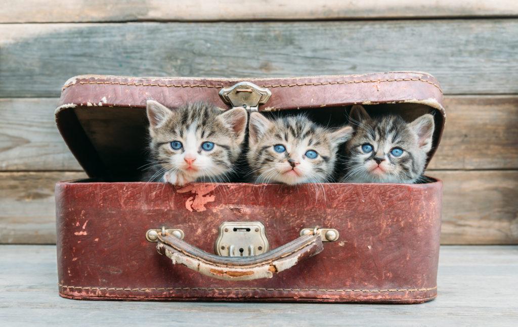 kittens suitcase